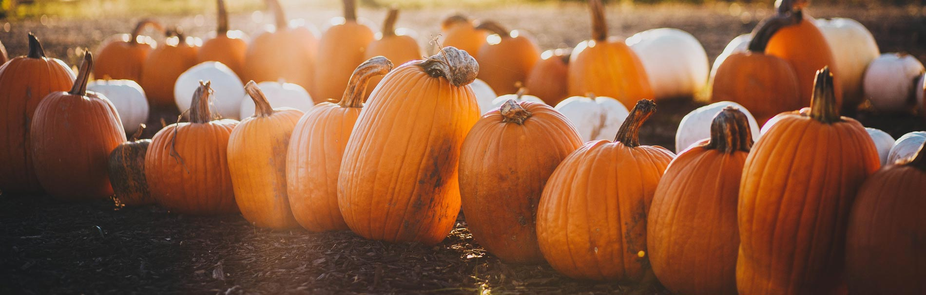 11 Things We Love About Fall - Carmel Retirement